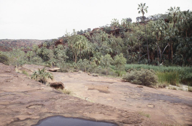 http://media.e-taxonomy.eu/palmae/photos/palm_tc_114949_7.jpg