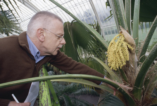 http://media.e-taxonomy.eu/palmae/photos/palm_tc_165547_1.jpg