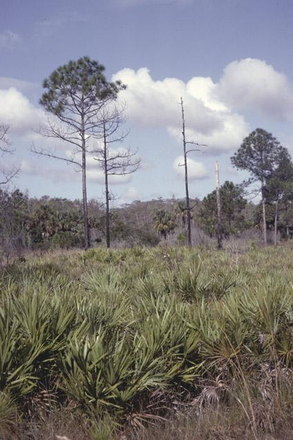 http://media.e-taxonomy.eu/palmae/photos/palm_tc_190787_4.jpg