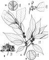 http://media.e-taxonomy.eu/salvador/berendsohn-et-al-2016/thumbs/266.jpg
